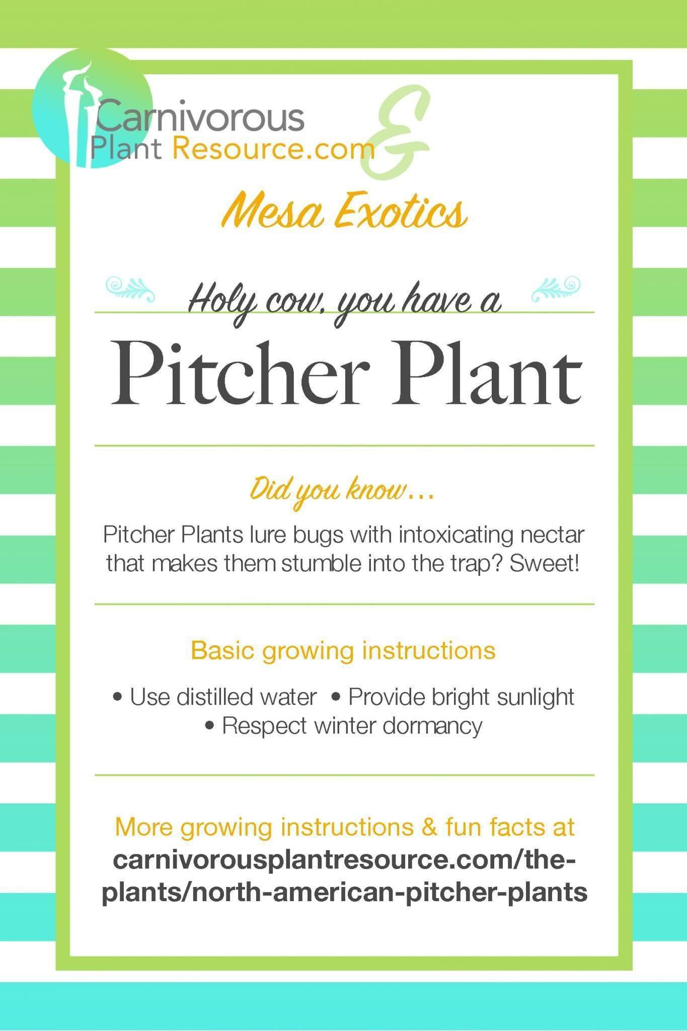 CPR and Mesa Exotics Pitcher Plant flier.jpg