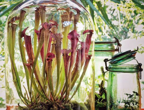 How to make a carnivorous plant terrarium