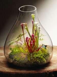 carnivorous plant terrarium-open