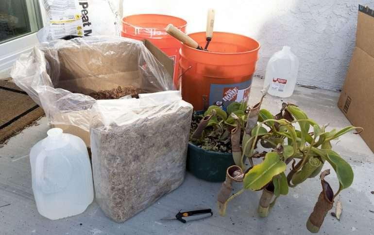 Nepenthes repotting materials