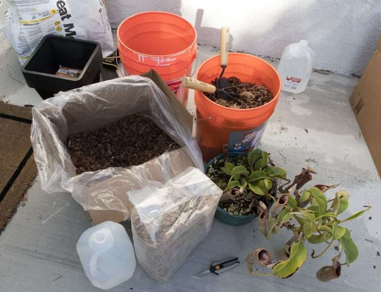 Nepenthes soil components