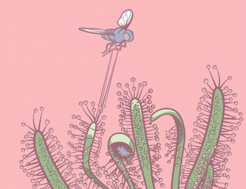 The Beginner's Survival Guide to Carnivorous Plants