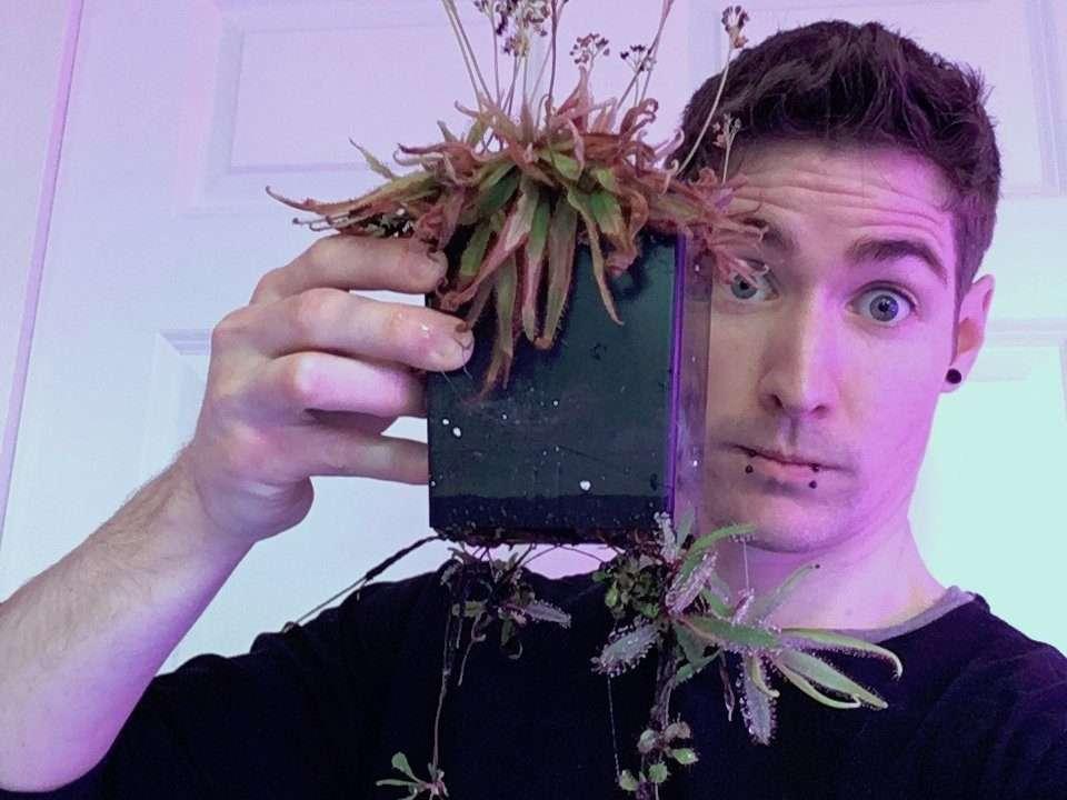Drosera adelae root plantlets