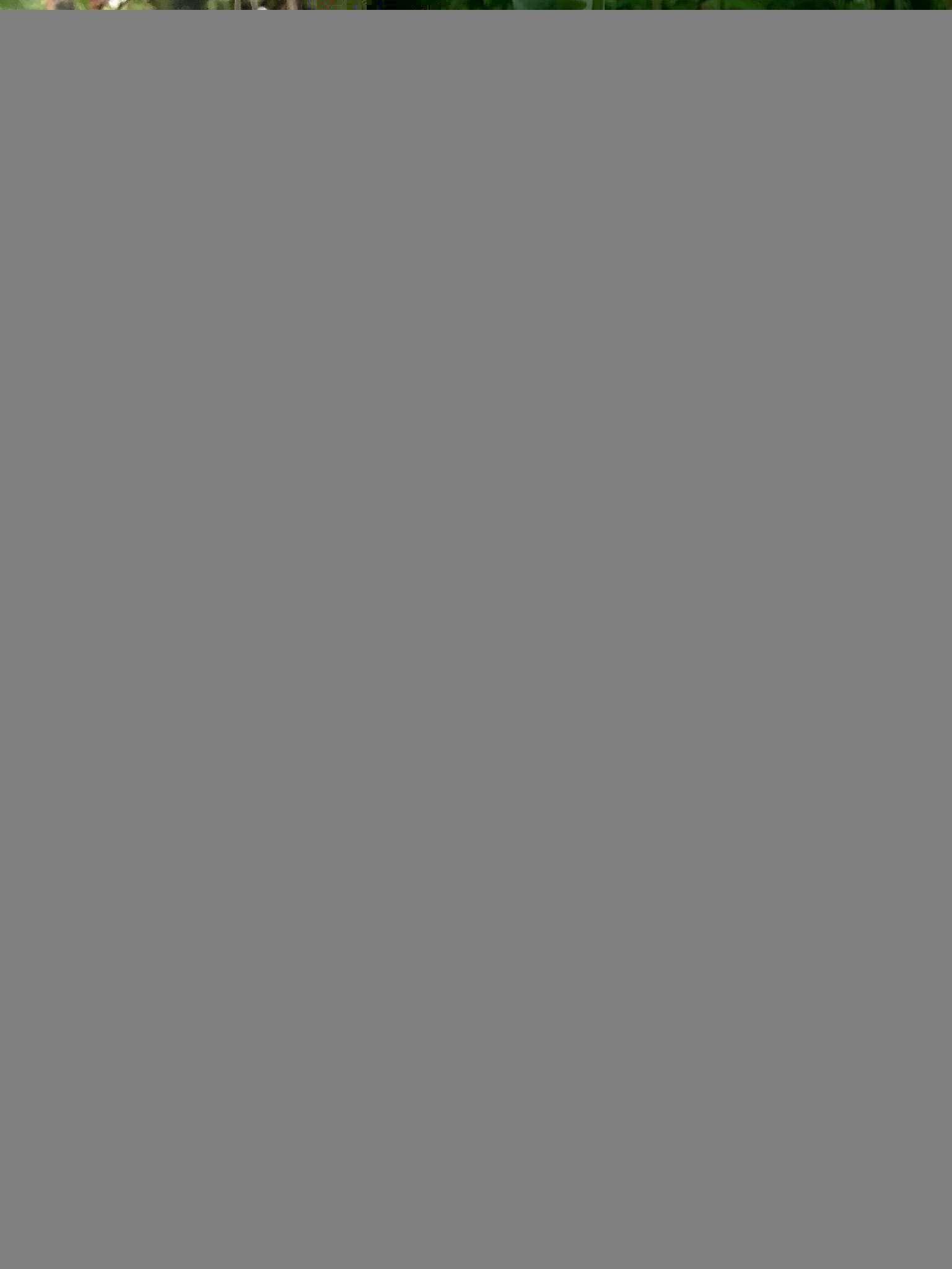 Utricularia humboldtii x alpina