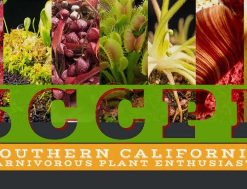 Welcome Southern California Carnivorous Plant Enthusiasts!